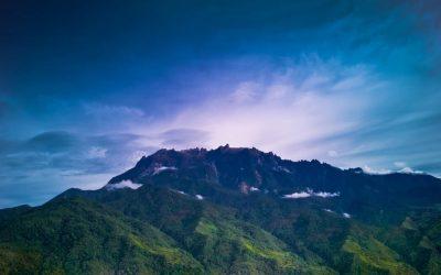 Where the Rain Forest Dies….